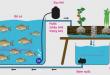 Mô hình aquaponics đơn giản