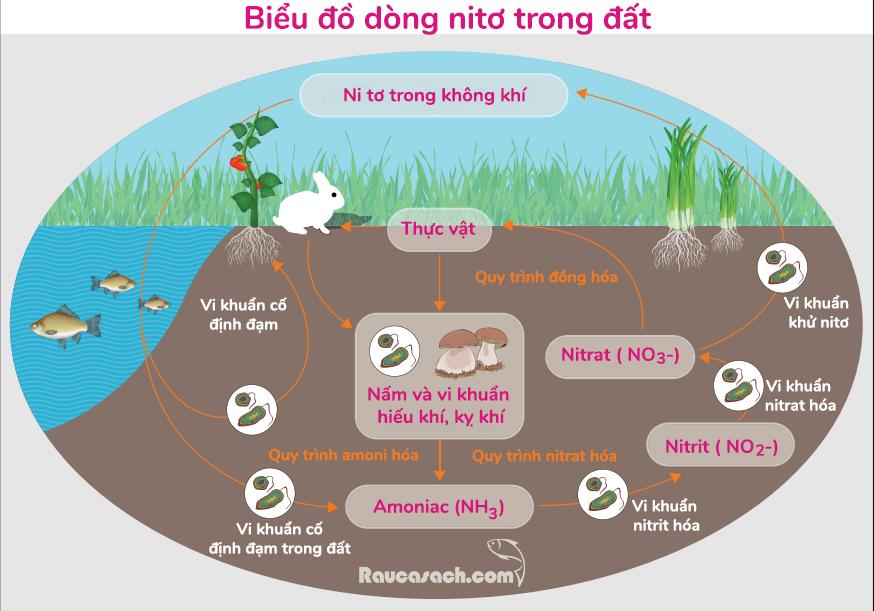 bieu-do-dong-nito-trong-dat