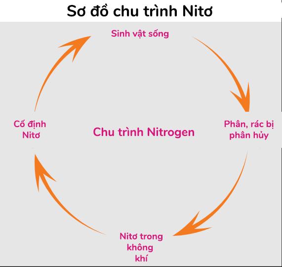 chu-trinh-nito