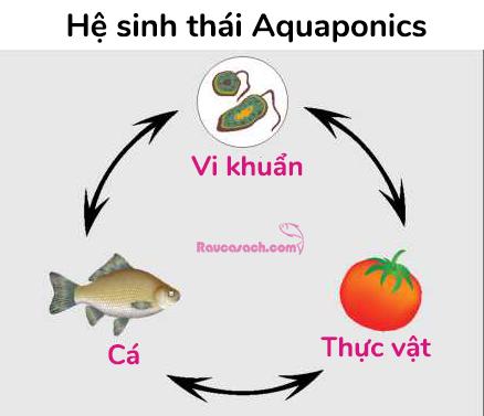he-sinh-thai-aquaponics