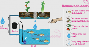 sinh-vat-trong-aquaponics-ca-cay-vikhuan